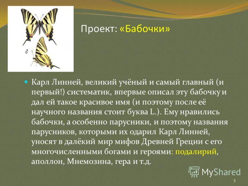 Проект: «Бабочки» 5 Карл Линней, великий учёный и самый главный (и первый!) систематик, впервые описал эту бабочку и дал ей такое красивое имя (и поэтому после её научного названия стоит буква L.). Ему нравились бабочки, а особенно парусники, и поэто