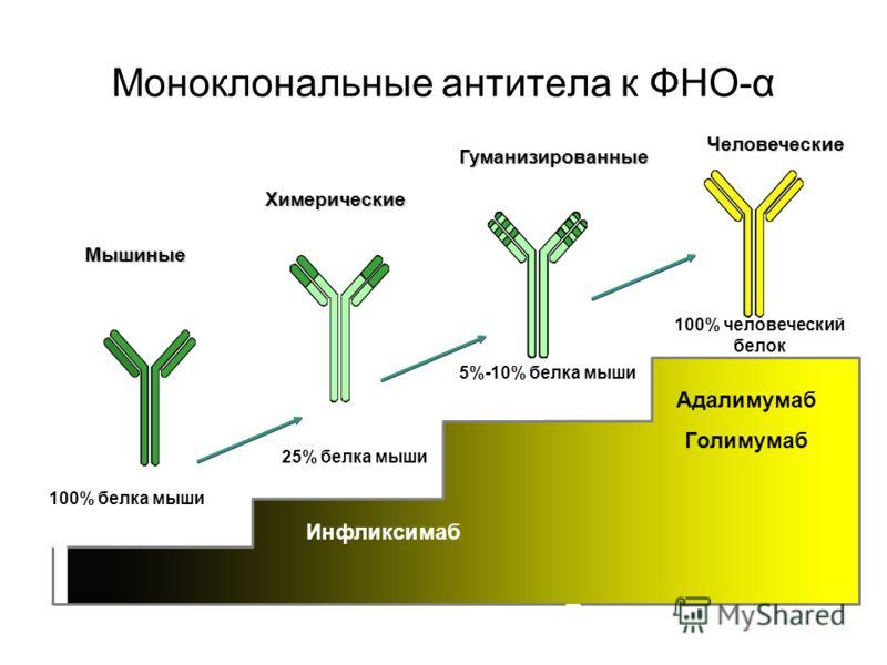 Моноклональные антитела к ФНО-α Adalimumab (Adalimumab) Человеческие Мышиные Химерические Гуманизированные 5%-10% белка мыши 100% человеческий белок 25% белка мыши 100% белка мыши Инфликсимаб Адалимумаб Голимумаб