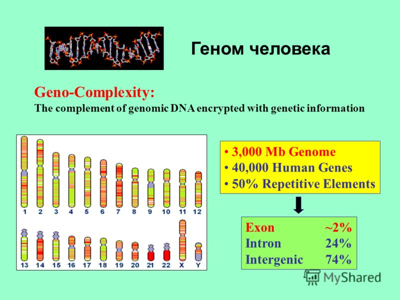 Геном человека Geno-Complexity: The complement of genomic DNA encrypted with genetic information Exon ~2% Intron24% Intergenic74% 3,000 Mb Genome 40,000 Human Genes 50% Repetitive Elements