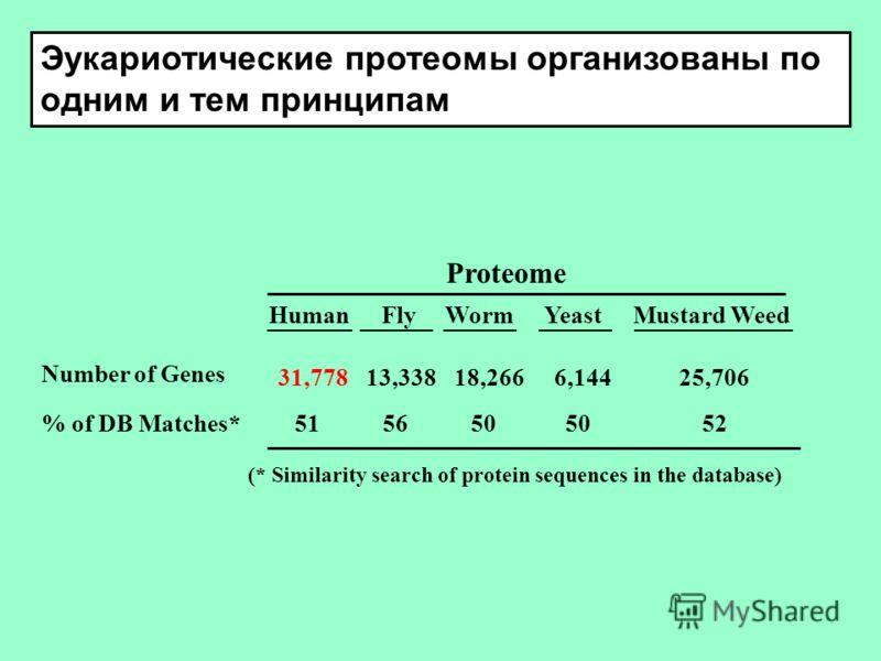Эукариотические протеомы организованы по одним и тем принципам Proteome Human FlyWorm Yeast Mustard Weed Number of Genes 31,77813,33818,266 6,144 25,706 % of DB Matches* 515650 50 52 (* Similarity search of protein sequences in the database)