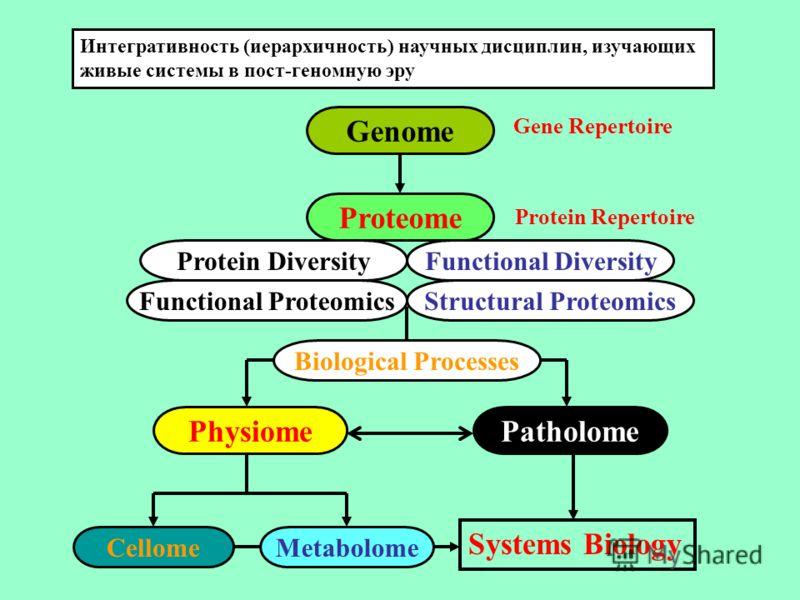 Protein DiversityFunctional Diversity Biological Processes PhysiomePatholome CellomeMetabolome Proteome Genome Интегративность (иерархичность) научных дисциплин, изучающих живые системы в пост-геномную эру Functional ProteomicsStructural Proteomics G
