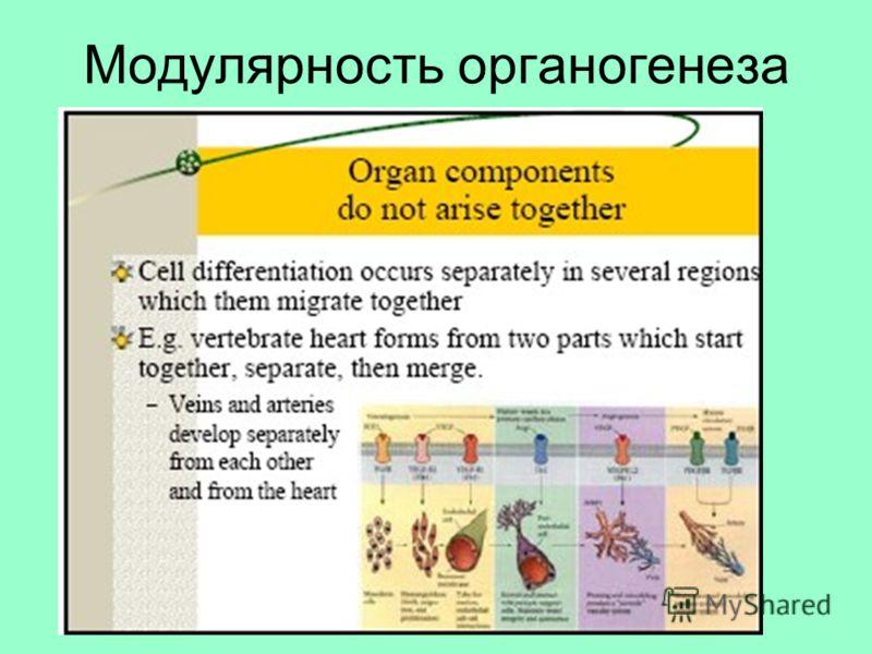 Модулярность органогенеза