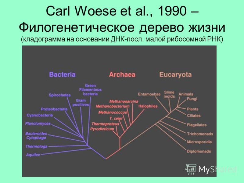 Carl Woese et al., 1990 – Филогенетическое дерево жизни (кладограмма на основании ДНК-посл. малой рибосомной РНК)