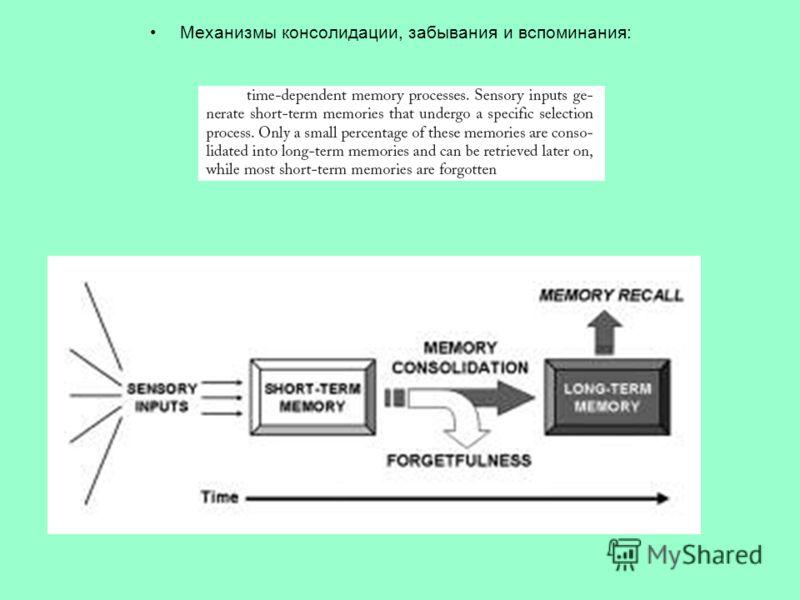 Механизмы консолидации, забывания и вспоминания: