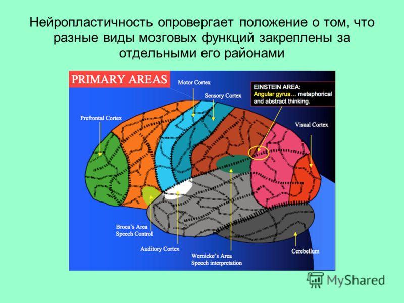 Нейропластичность опровергает положение о том, что разные виды мозговых функций закреплены за отдельными его районами