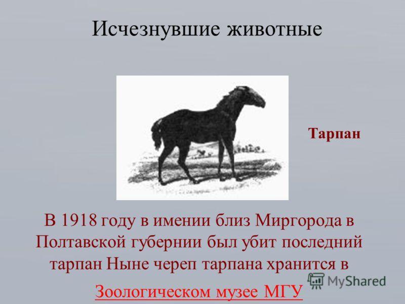 В 1918 году в имении близ Миргорода в Полтавской губернии был убит последний тарпан Ныне череп тарпана хранится в Зоологическом музее МГУ Зоологическом музее МГУ Исчезнувшие животные Тарпан