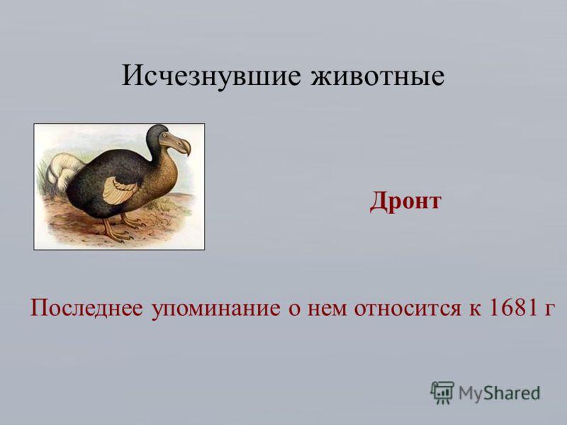 Исчезнувшие животные Дронт Последнее упоминание о нем относится к 1681 г