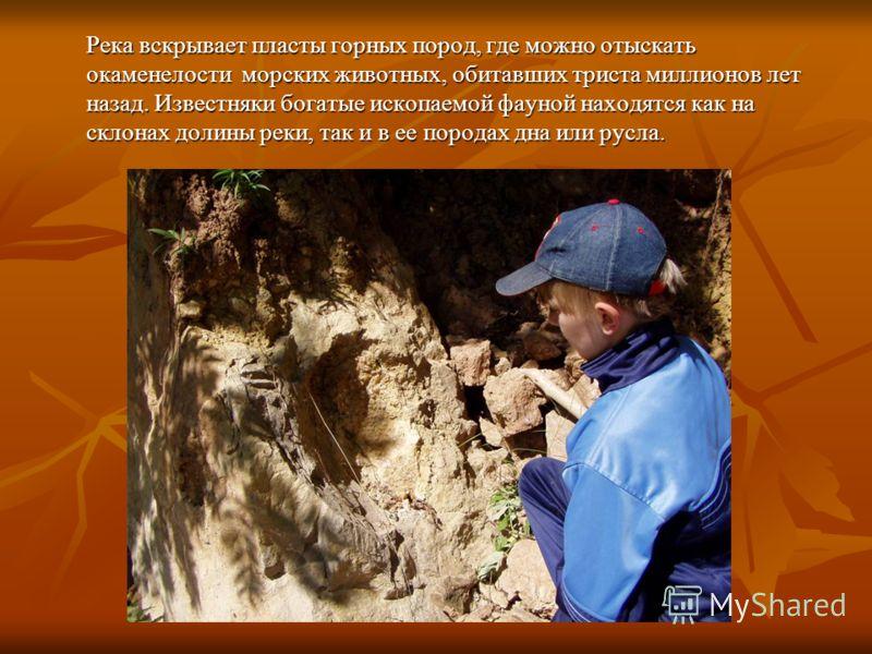 Река вскрывает пласты горных пород, где можно отыскать окаменелости морских животных, обитавших триста миллионов лет назад. Известняки богатые ископаемой фауной находятся как на склонах долины реки, так и в ее породах дна или русла.