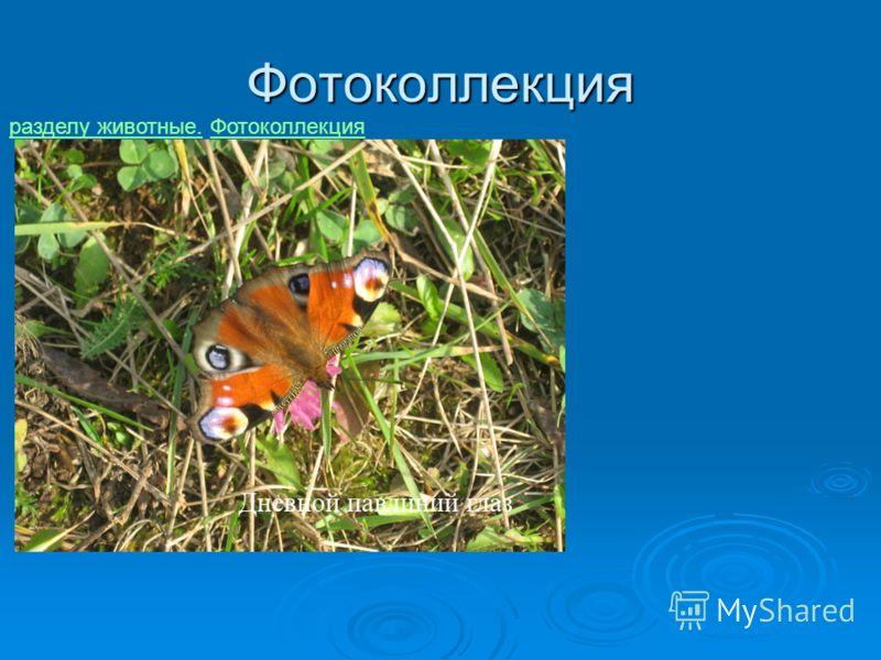 Фотоколлекция разделу животные.разделу животные. Фотоколлекция Фотоколлекция