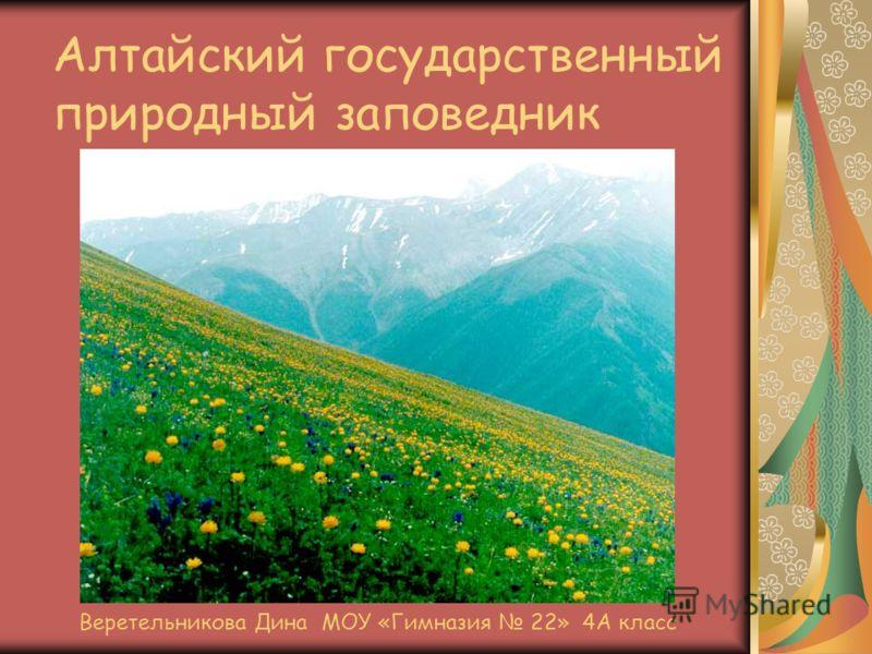 Алтайский государственный природный заповедник Веретельникова Дина МОУ «Гимназия 22» 4А класс