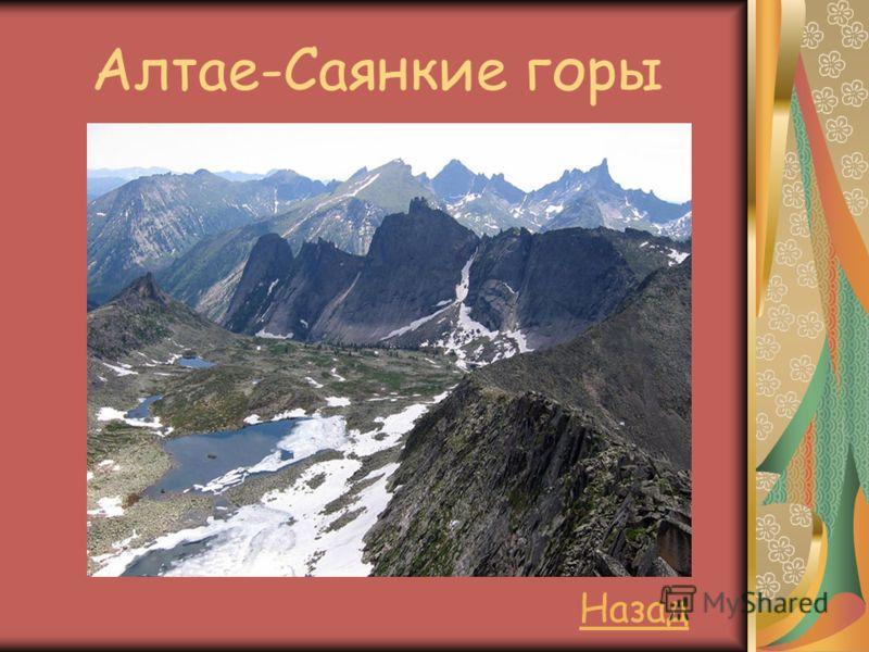 Алтае-Саянкие горы Назад