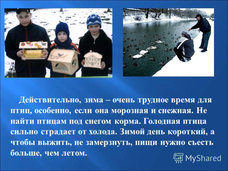 Действительно, зима – очень трудное время для птиц, особенно, если она морозная и снежная. Не найти птицам под снегом корма. Голодная птица сильно страдает от холода. Зимой день короткий, а чтобы выжить, не замерзнуть, пищи нужно съесть больше, чем л