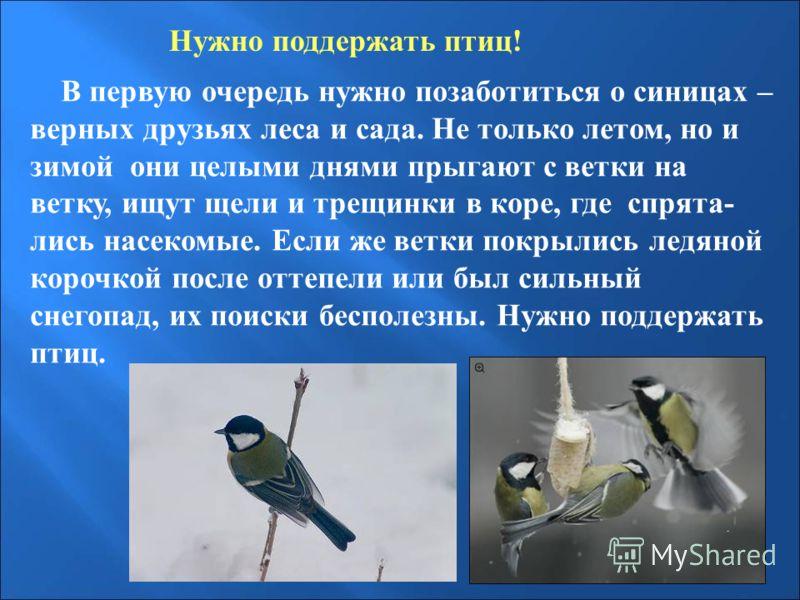 Нужно поддержать птиц! В первую очередь нужно позаботиться о синицах – верных друзьях леса и сада. Не только летом, но и зимой они целыми днями прыгаю