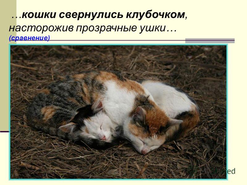 …кошки свернулись клубочком, насторожив прозрачные ушки… (сравнение)