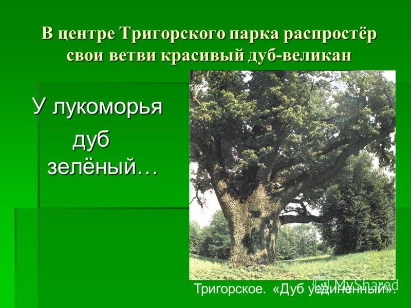 В центре Тригорского парка распростёр свои ветви красивый дуб-великан У лукоморья дуб зелёный… Тригорское. «Дуб уединенный».