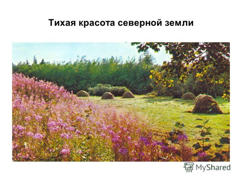 Тихая красота северной земли