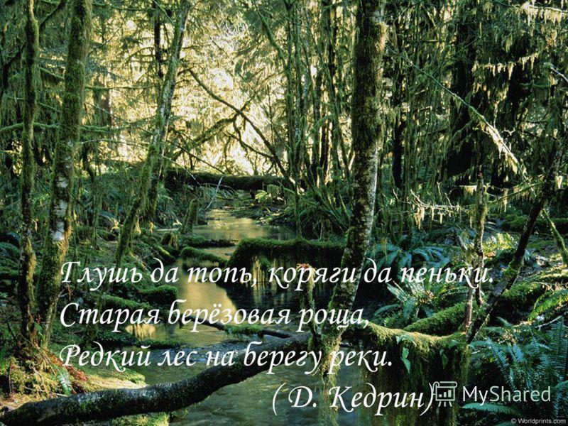 Глушь да топь, коряги да пеньки. Старая берёзовая роща, Редкий лес на берегу реки. ( Д. Кедрин)