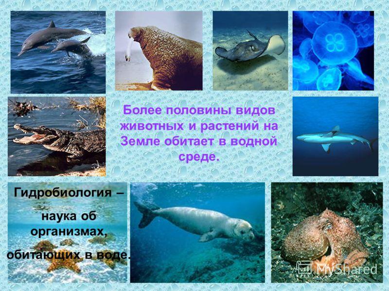 Более половины видов животных и растений на Земле обитает в водной среде. Гидробиология – наука об организмах, обитающих в воде.