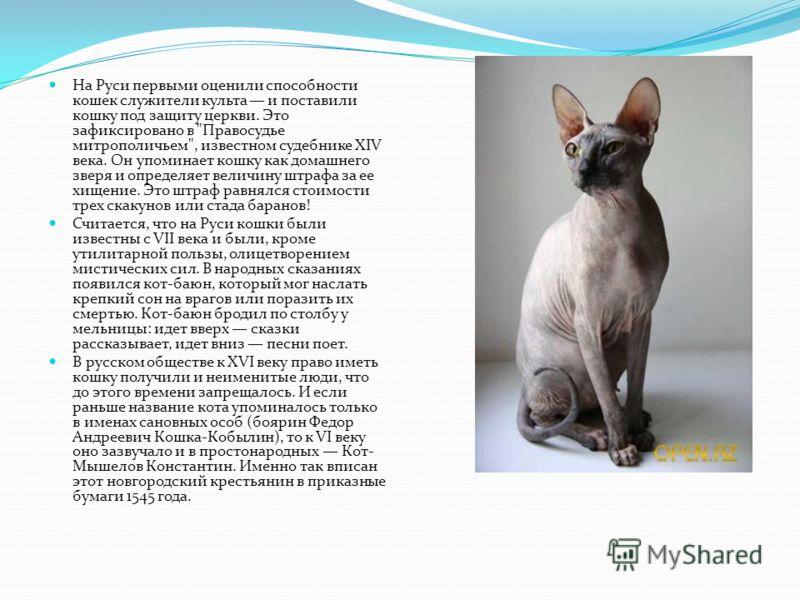 На Руси первыми оценили способности кошек служители культа и поставили кошку под защиту церкви. Это зафиксировано в