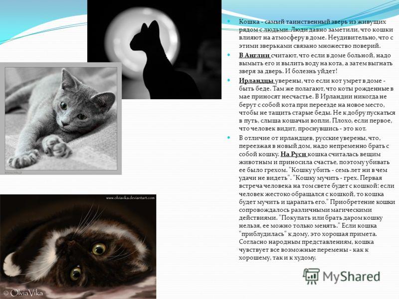 Кошка - самый таинственный зверь из живущих рядом с людьми. Люди давно заметили, что кошки влияют на атмосферу в доме. Неудивительно, что с этими зверьками связано множество поверий. В Англии считают, что если в доме больной, надо вымыть его и вылить
