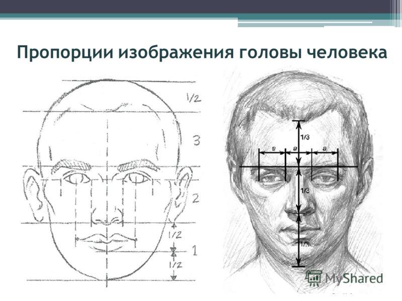 Пропорции изображения головы человека