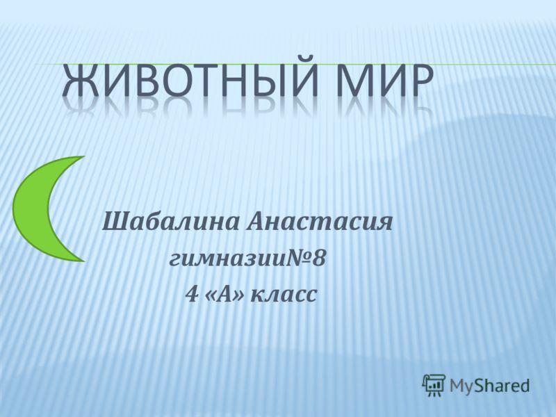 Шабалина Анастасия гимназии8 4 «А» класс