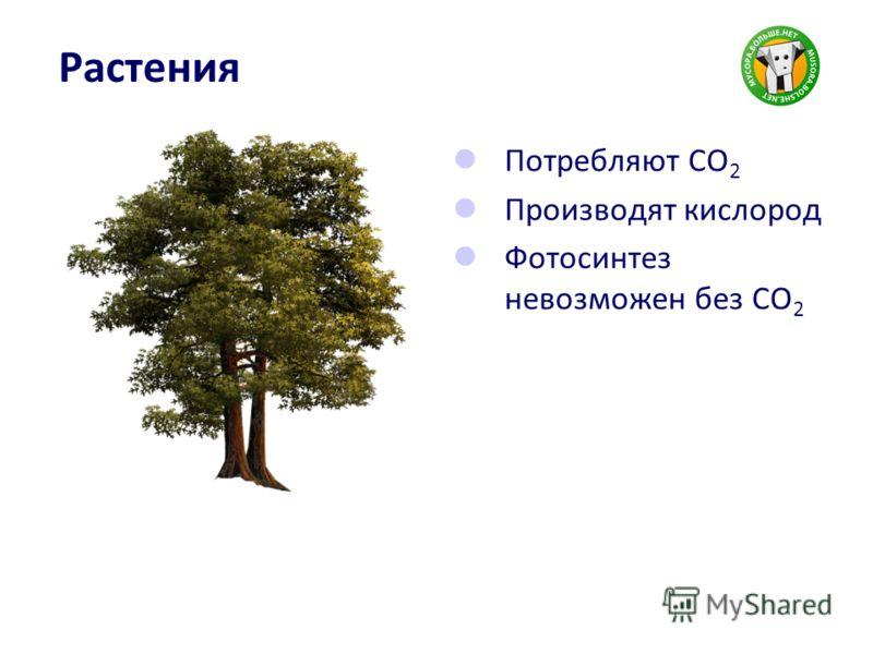 Растения Потребляют CO 2 Производят кислород Фотосинтез невозможен без CO 2
