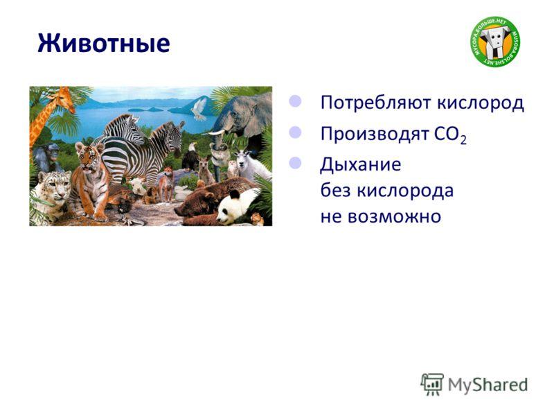 Животные Потребляют кислород Производят CO 2 Дыхание без кислорода не возможно