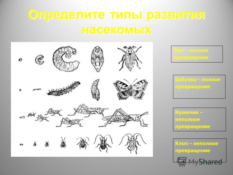 Определите типы развития насекомых Жук – полное превращение Бабочка – полное превращение Кузнечик – неполное превращение Клоп – неполное превращение