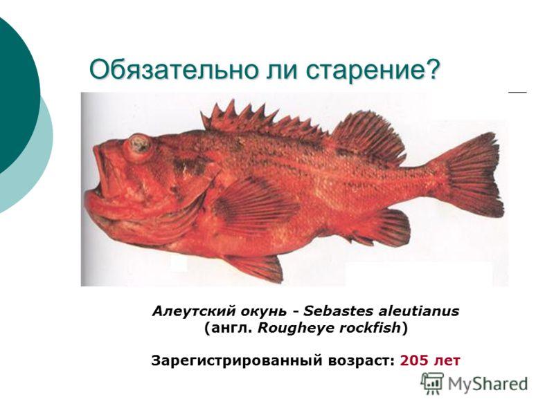 Обязательно ли старение? Алеутский окунь - Sebastes aleutianus (англ. Rougheye rockfish) Зарегистрированный возраст: 205 лет