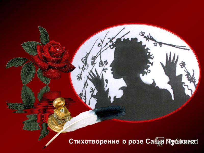 Стихотворение о розе Саши Пушкина