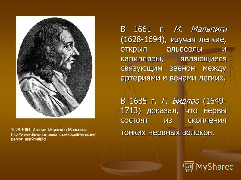 В 1661 г. М. Мальпиги (1628-1694), изучая легкие, открыл альвеолы и капилляры, являющиеся связующим звеном между артериями и венами легких. В 1685 г. Г. Бидлоо (1649- 1713) доказал, что нервы состоят из скопления тонких нервных волокон. 1628-1694, Ит