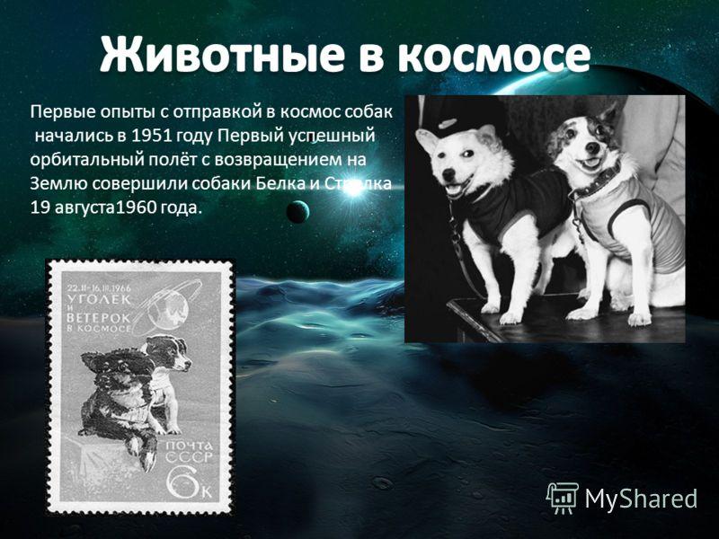 Первые опыты с отправкой в космос собак начались в 1951 году Первый успешный орбитальный полёт с возвращением на Землю совершили собаки Белка и Стрелка 19 августа1960 года.