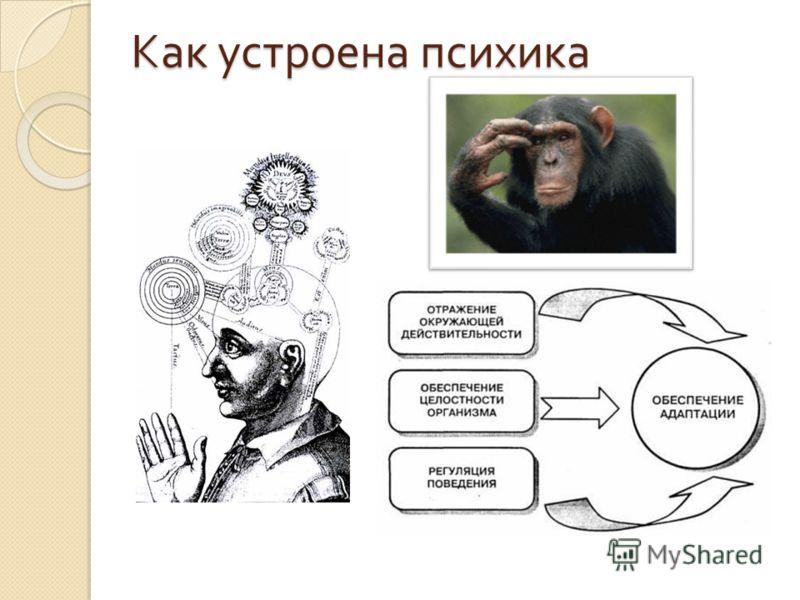Как устроена психика