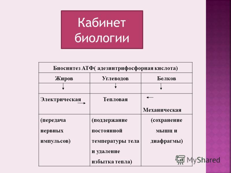 Биосинтез АТФ( адезинтрифосфорная кислота) ЖировУглеводовБелков ЭлектрическаяТепловая Механическая (передача нервных импульсов) (поддержание постоянной температуры тела и удаление избытка тепла) (сохранение мышц и диафрагмы) Кабинет биологии