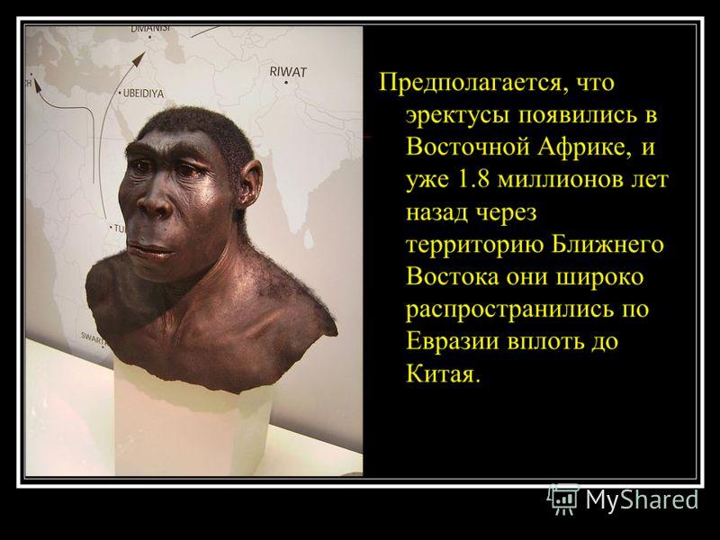 Предполагается, что эректусы появились в Восточной Африке, и уже 1.8 миллионов лет назад через территорию Ближнего Востока они широко распространились по Евразии вплоть до Китая.