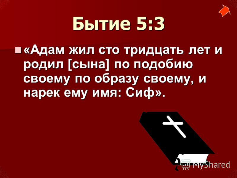 «Адам жил сто тридцать лет и родил [сына] по подобию своему по образу своему, и нарек ему имя: Сиф». «Адам жил сто тридцать лет и родил [сына] по подобию своему по образу своему, и нарек ему имя: Сиф». Бытие 5:3