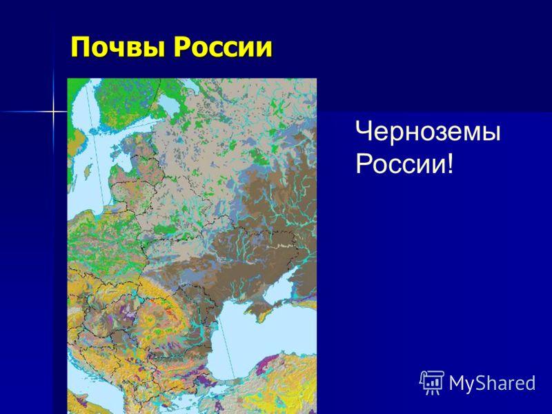Почвы России Черноземы России!