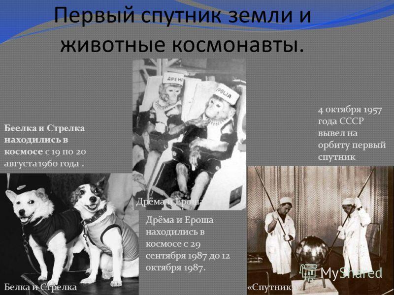 Первый спутник земли и животные космонавты. Белка и Стрелка«Спутник 1» Дрёма и Ероша 4 октября 1957 года СССР вывел на орбиту первый спутник Бе елка и Стрелка находились в космосе с 19 по 20 августа 1960 года. Дрёма и Ероша находились в космосе с 29