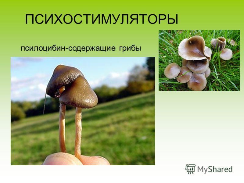 ПСИХОСТИМУЛЯТОРЫ псилоцибин-содержащие грибы