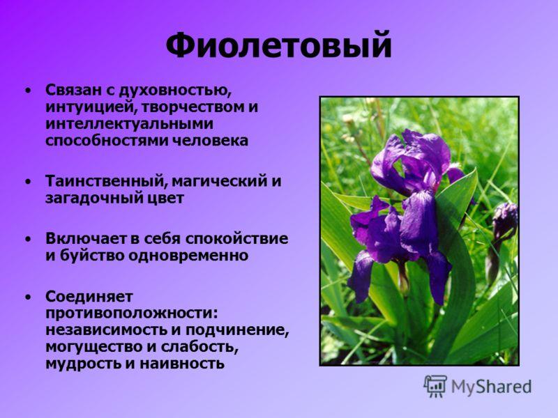 Фиолетовый Связан с духовностью, интуицией, творчеством и интеллектуальными способностями человека Таинственный, магический и загадочный цвет Включает в себя спокойствие и буйство одновременно Соединяет противоположности: независимость и подчинение,
