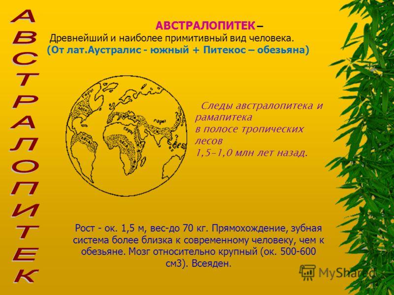 АВСТРАЛОПИТЕК – Древнейший и наиболее примитивный вид человека. (От лат.Аустралис - южный + Питекос – обезьяна) Следы австралопитека и рамапитека в полосе тропических лесов 1,5-1,0 млн лет назад. Рост - ок. 1,5 м, вес-до 70 кг. Прямохождение, зубная