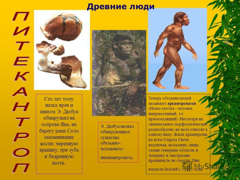 Древние люди Сто лет тому назад врач и анатом Э. Дюбуа обнаружил на острове Ява, на берегу реки Соло окаменевшие кости: черепную крышку, три зуба и бедренную кость. Э. Дюбуа назвал обнаруженное существо обезьяно- человеком - питекантропом. Теперь обе