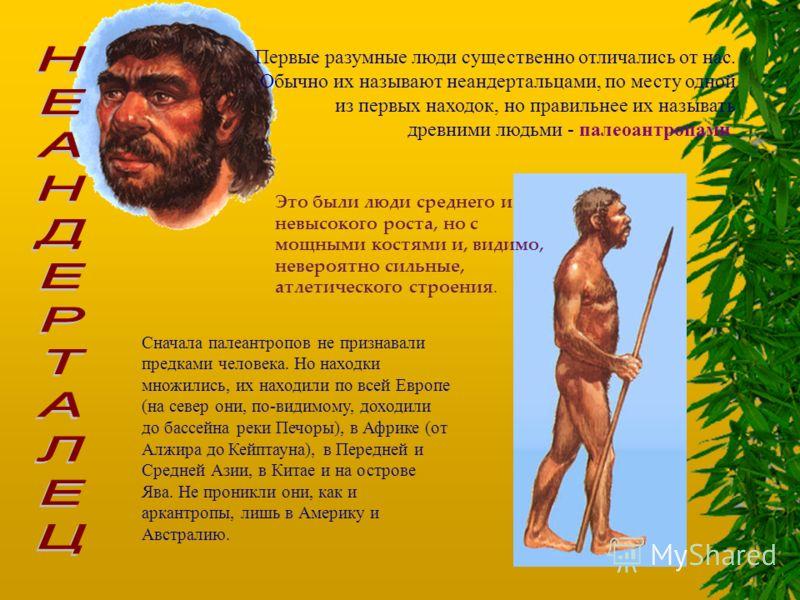 Первые разумные люди существенно отличались от нас. Обычно их называют неандертальцами, по месту одной из первых находок, но правильнее их называть древними людьми - палеоантропами. Это были люди среднего и невысокого роста, но с мощными костями и, в