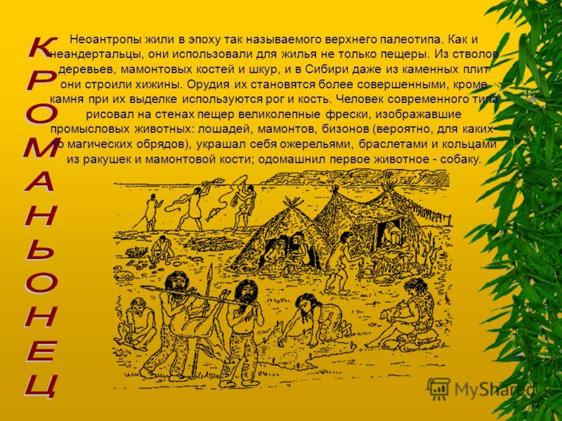 Неоантропы жили в эпоху так называемого верхнего палеотипа. Как и неандертальцы, они использовали для жилья не только пещеры. Из стволов деревьев, мамонтовых костей и шкур, и в Сибири даже из каменных плит они строили хижины. Орудия их становятся бол