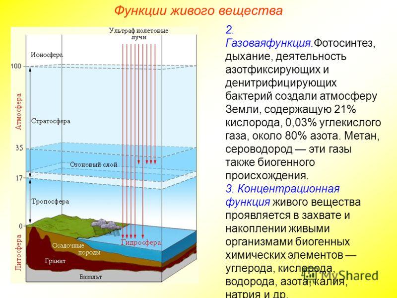 2. Газоваяфункция.Фотосинтез, дыхание, деятельность азотфиксирующих и денитрифицирующих бактерий создали атмосферу Земли, содержащую 21% кислорода, 0,03% углекислого газа, около 80% азота. Метан, сероводород эти газы также биогенного происхождения. 3