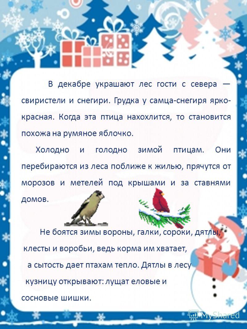 В декабре украшают лес гости с севера свиристели и снегири. Грудка у самца-снегиря ярко- красная. Когда эта птица нахохлится, то становится похожа на румяное яблочко. Холодно и голодно зимой птицам. Они перебираются из леса поближе к жилью, прячутся