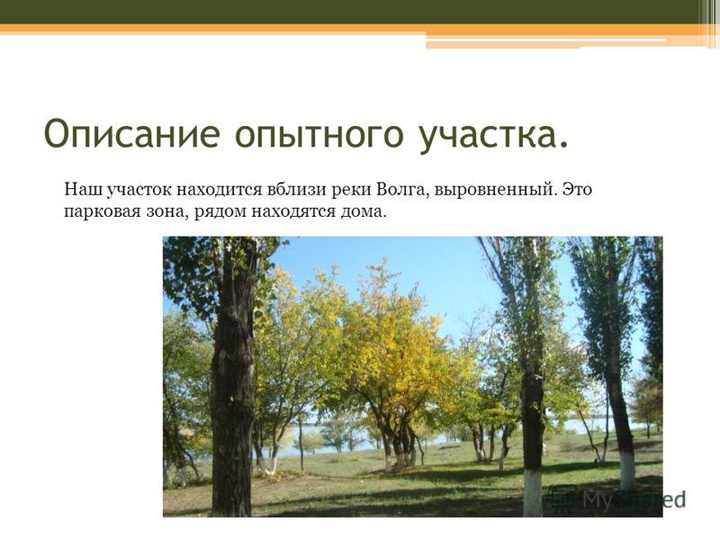 Описание опытного участка. Наш участок находится вблизи реки Волга, выровненный. Это парковая зона, рядом находятся дома.