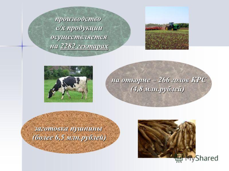 производство с/х продукции осуществляется осуществляется на 2282 гектарах на откорме – 266 голов КРС (4,8 млн.рублей) заготовка пушнины (более 6,5 млн.рублей)