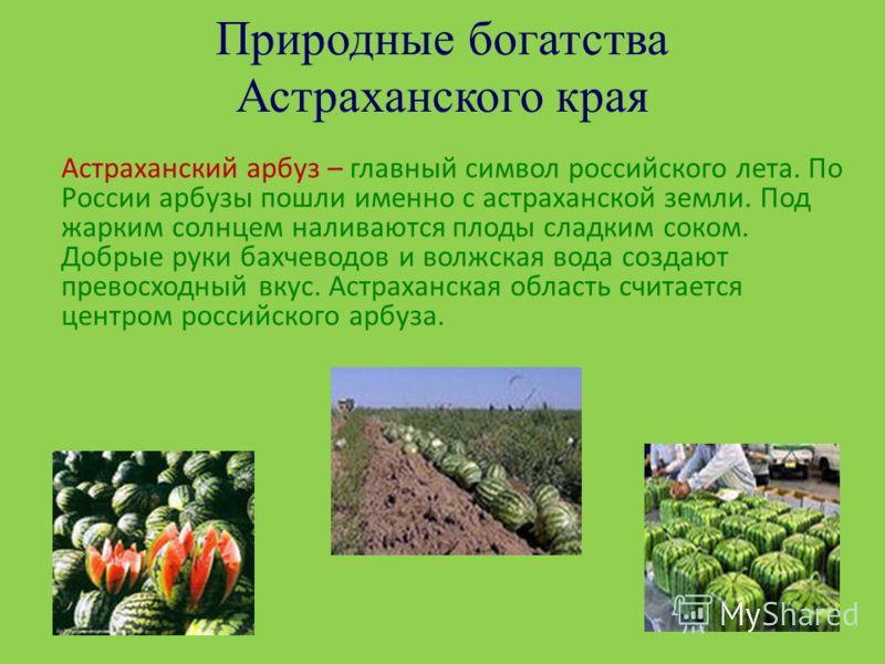 Природные богатства Астраханского края Астраханский арбуз – главный символ российского лета. По России арбузы пошли именно с астраханской земли. Под жарким солнцем наливаются плоды сладким соком. Добрые руки бахчеводов и волжская вода создают превосх
